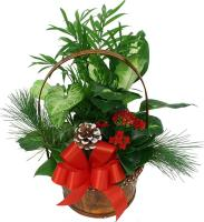 Merry Christmas Plant